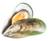 Mussel isolated on white. clipping path. Mussel isolated on white. with clipping path Royalty Free Stock Photo