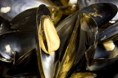 Mussel in its shell. Stock Image
