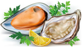 Mussel and Oyster Royalty Free Stock Image