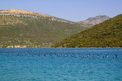 Mussel plantation of a farm for growing mussels. Adriatic Sea. Croatia, Europe royalty free stock photos