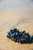 Mussel on a sandy beach. Background. Close-up. Royalty Free Stock Photography