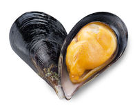 Mussel in a shape of heart. Stock Images