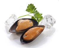 Mussel on the shell Royalty Free Stock Photos