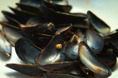 Mussel shells. On a plate Stock Photography