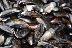 Mussel shells Stock Photography
