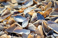 Mussel shells Royalty Free Stock Photography