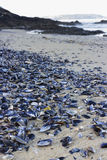 Mussel shells. Stock Photography