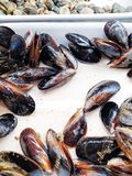 The mussel in the sink is ready to be cooked. Plate of mussels. Mussel shells lie on a plate close-up royalty free stock photo