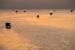 Mussel uprawia ziemię w morzu Obrazy Stock