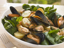 Mussel Watercress and Potato Salad Stock Photos