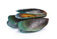 Mussel on white background Stock Photo