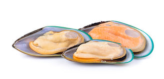 Mussel on white background Stock Image