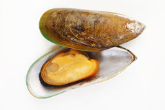 Mussel on white Stock Images