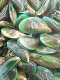 Mussell. Fresh raw mussel Royalty Free Stock Photography