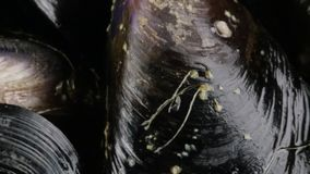 Mussels życiorys dla restauraci zdjęcie wideo
