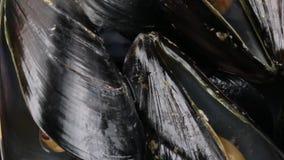 Mussels życiorys dla restauraci zbiory