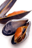 Mussels. Two open mussels as closeup on white background Royalty Free Stock Image