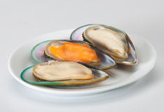 Mussels. Three mussels lay out on a white plate Stock Photography