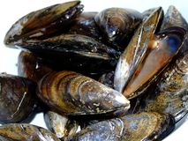 Mussels. Close-up of a dish of fresh mussels Royalty Free Stock Photography