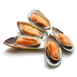 Mussels. Five halves of delicious blue cooked mussels isolated on white studio background stock photo