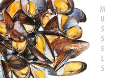Free Mussels Stock Photo - 16950610