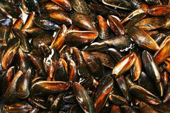 Mussels Stock Images