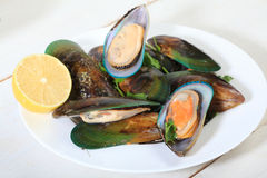Mussels Stock Photo