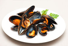 Mussels. On a plate on an isolated background Royalty Free Stock Photos