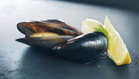 Free Mussels Royalty Free Stock Photos - 33186288