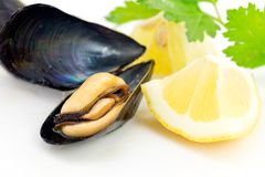 Mussels Obrazy Royalty Free