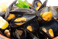 Mussels Fotografia Stock