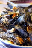 Mussels Stock Photography