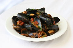 Mussels. With a tomato sauce stock photo