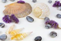 Mussels agaty 5 Zdjęcie Royalty Free