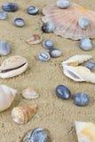 Mussels agaty 4 Zdjęcie Stock