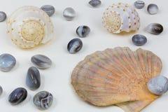 Mussels agaty 3 Zdjęcia Royalty Free