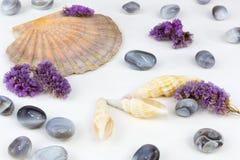 Mussels agaty 2 Fotografia Stock