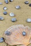 Mussels agaty Obraz Stock