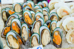 Mussels in the Asian market Stock Photography