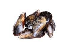 Fresh mussels isolated on white background. Mytilidae stock photography