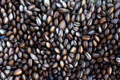 Mussels background Stock Photos
