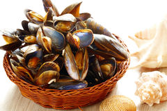 Mussels in basket. Cooked fresh mussels in basket Royalty Free Stock Photo