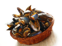 Mussels in basket. Cooked fresh mussels in basket Royalty Free Stock Photos