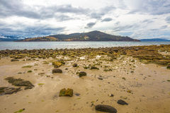 Mussels. The beach at Dennes Point Bruny Island Tasmania (Ausytralia) at low tide uncovering the young mussels growing on the rocks stock photo