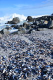 Mussels Beach Royalty Free Stock Photos