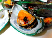 Mussels boiled Royalty Free Stock Images