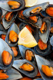 Mussels boiled with a squeeze of lemon Royalty Free Stock Photo