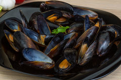 Mussels. In the bowl with parsley branch stock photography