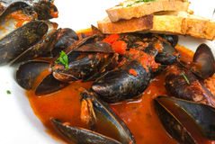 Mussels with Bread. Mussels in red sauce with bread on white plate Royalty Free Stock Photo