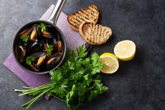 Mussels and bread toasts Royalty Free Stock Images